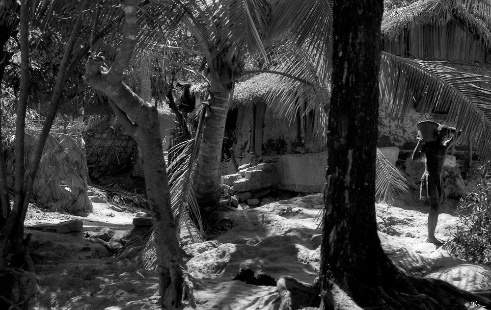 La vie de la palmeraie - Antsohihy, Madagascar 1998