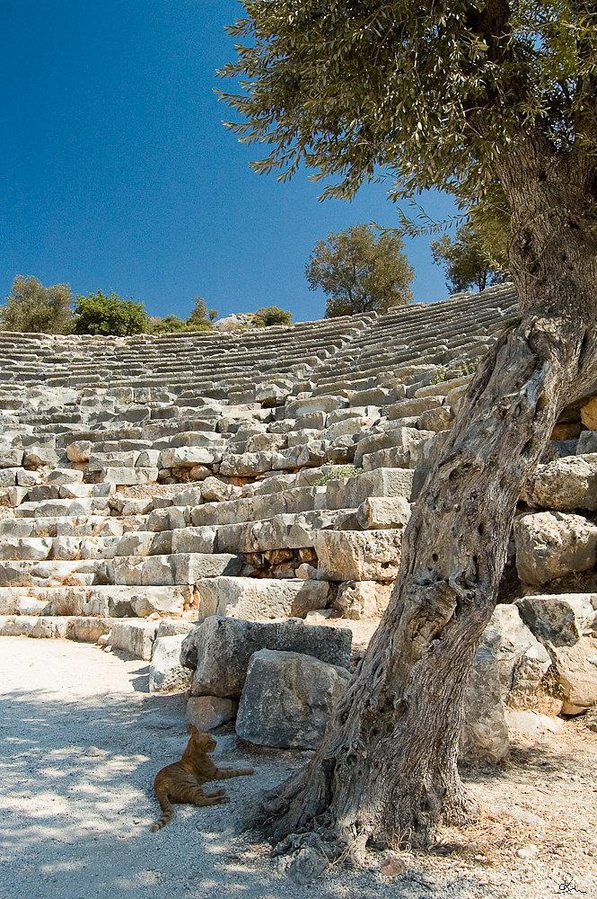 Théâtre antique de Kas, Turquie - A l'écart de la ville de Kas, un théâtre antique est gardé par un chat qui accueille les visiteurs sans quitter l'ombre de son olivier.